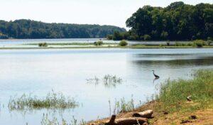 heron along the SoVa Wild Blueway